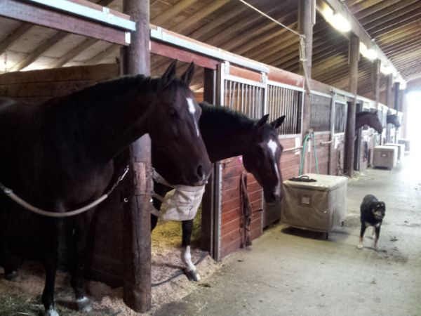 RockMeadow Equestrian Center