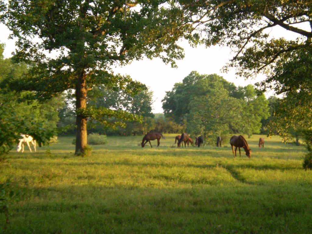 H & H Thoroughbred Farm