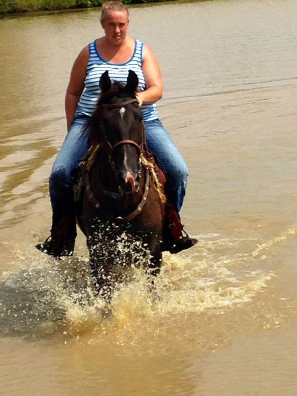 Black Tennessee Walking Horse for Sale in Mississippi