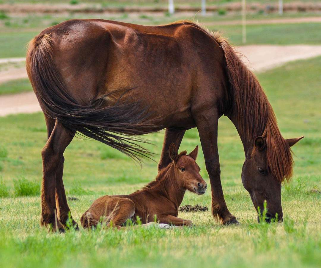 Baby Horses For Sale