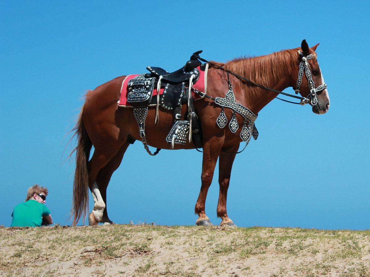 All Around Horses