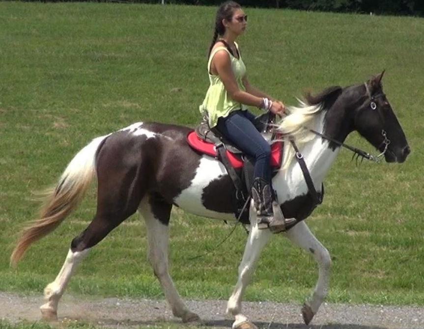 Naturally Gaited Horses