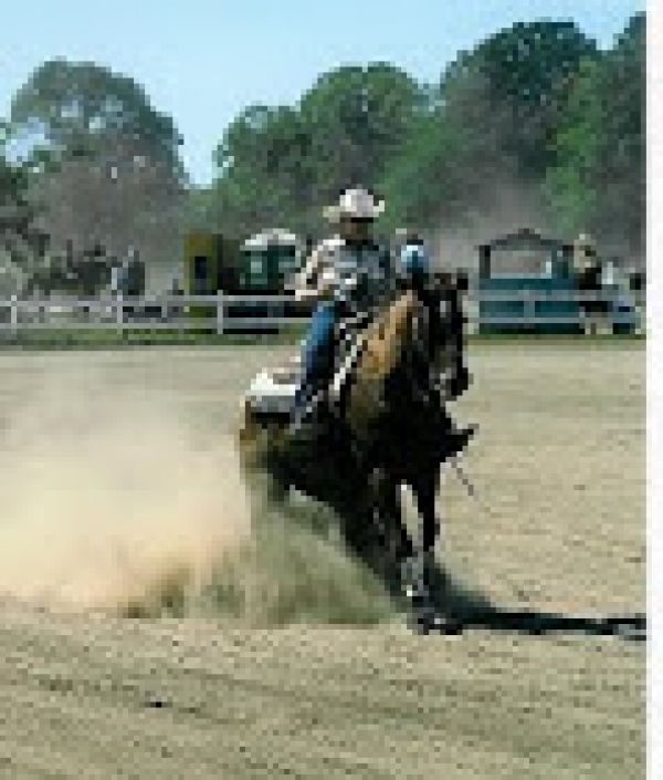 Reining Trainers In Idaho
